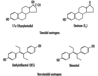 Case Study: Effects of Synthetic Oestrogens on